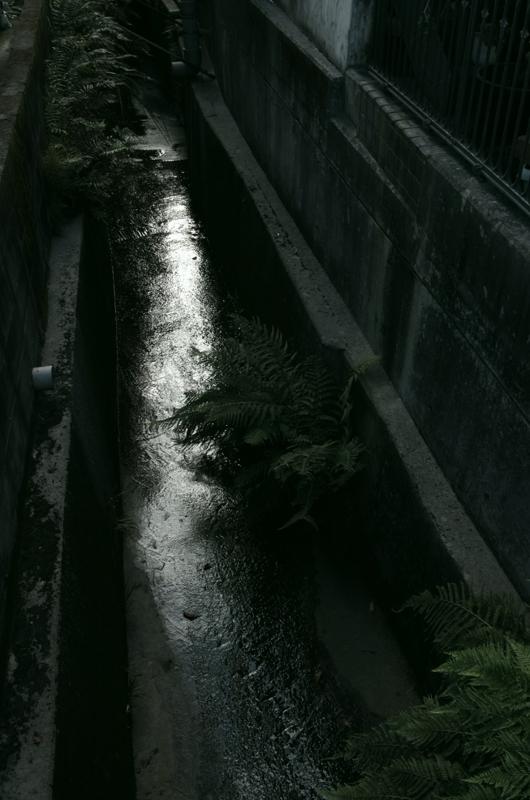 7:12 am ~ 7:17 am わざわざ散歩しに行く in Kagoshima...の画像