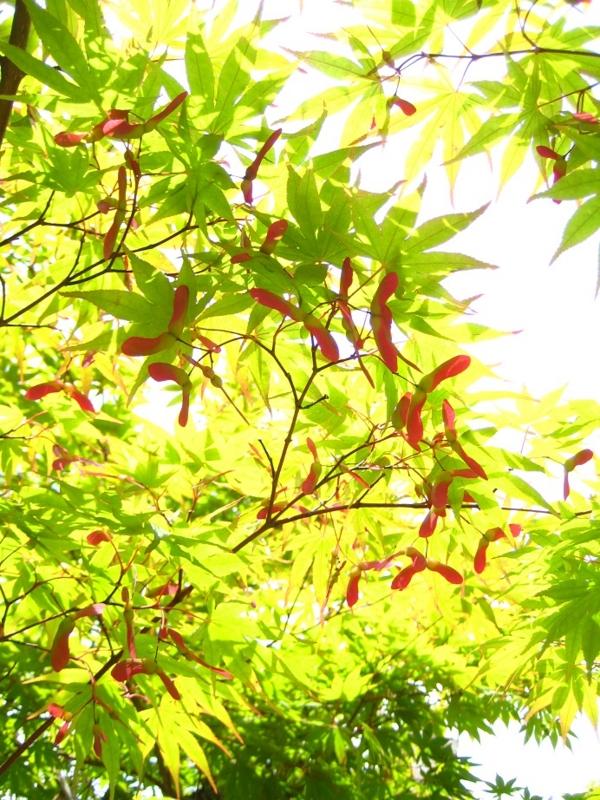 1:11 pm ~ 1:13 pm ~ 1:23 pm 柳谷観音 楊谷寺 へ、の画像