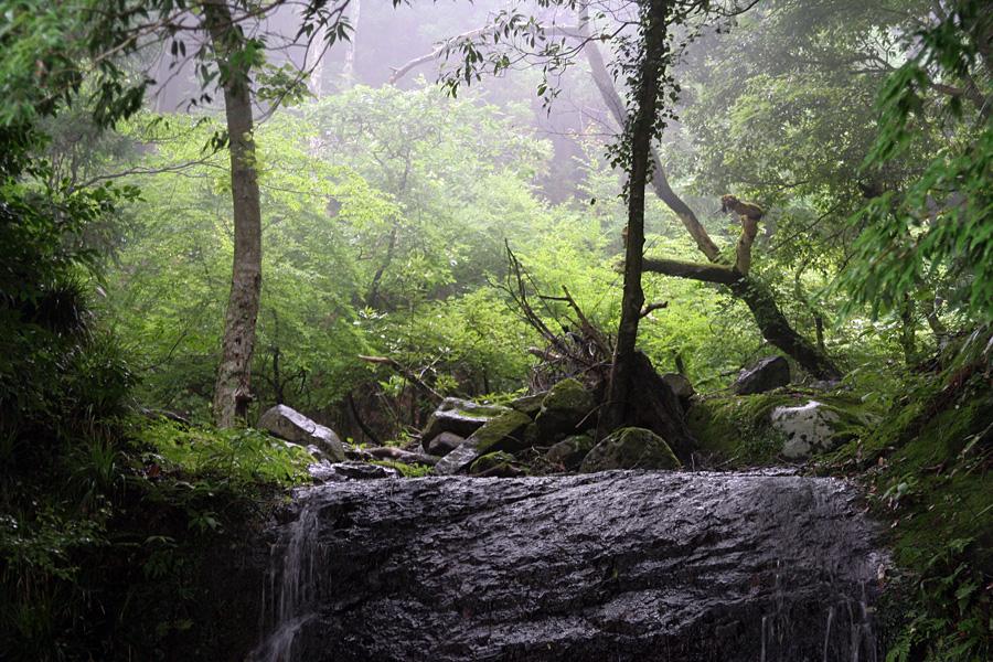 雨の夫婦滝@静岡、賀茂郡賀茂村
