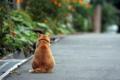 [猫]道端の猫
