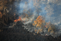 [風景]ハワイ島、溶岩に焼ける木々