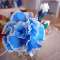 [flower]カーネーション