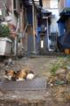 [風景]路地と猫