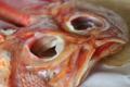 [food]金目鯛干物