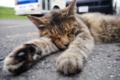 [猫]まだ昼寝中