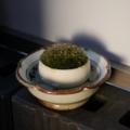 [風景]朝の苔