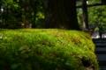 [風景][tour]日光、東照宮、の苔