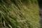 道志菜の種