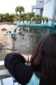 ウミガメはキャベツがごはん
