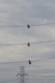送電線メンテナンス