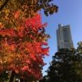 [風景]紅葉とランドマークタワー