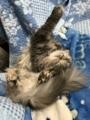 猫は身体が柔らかい