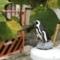 通勤途中にフンボルトペンギンに会った