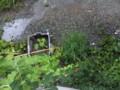 [園芸][スイカ][ナガイモ][ニガウリ][大葉]画面上の双葉はスイカ、四角の中は大葉、支柱は左から苦瓜、長芋。