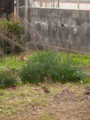 春の息吹2010.2.147  シロハラ