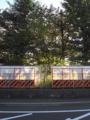 九州大学六本松跡地 クルミ