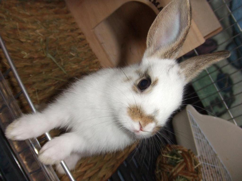 f:id:rabbit-hanapu:20160927143933j:plain