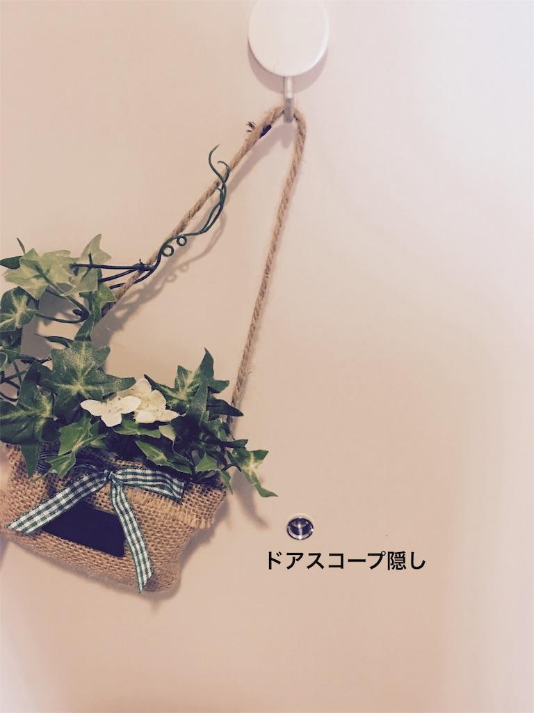 f:id:rabbit-pig-cat:20160611184618j:image
