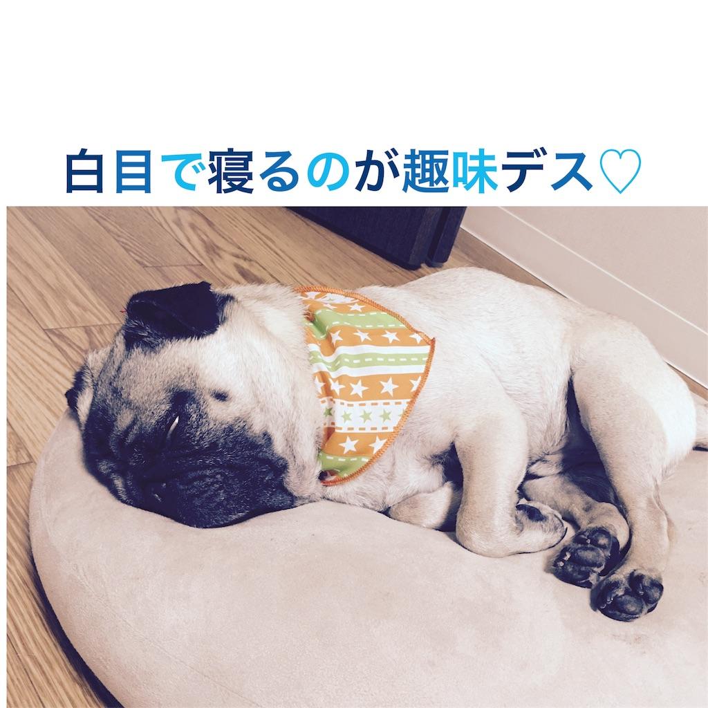 f:id:rabbit-pig-cat:20160907071152j:image