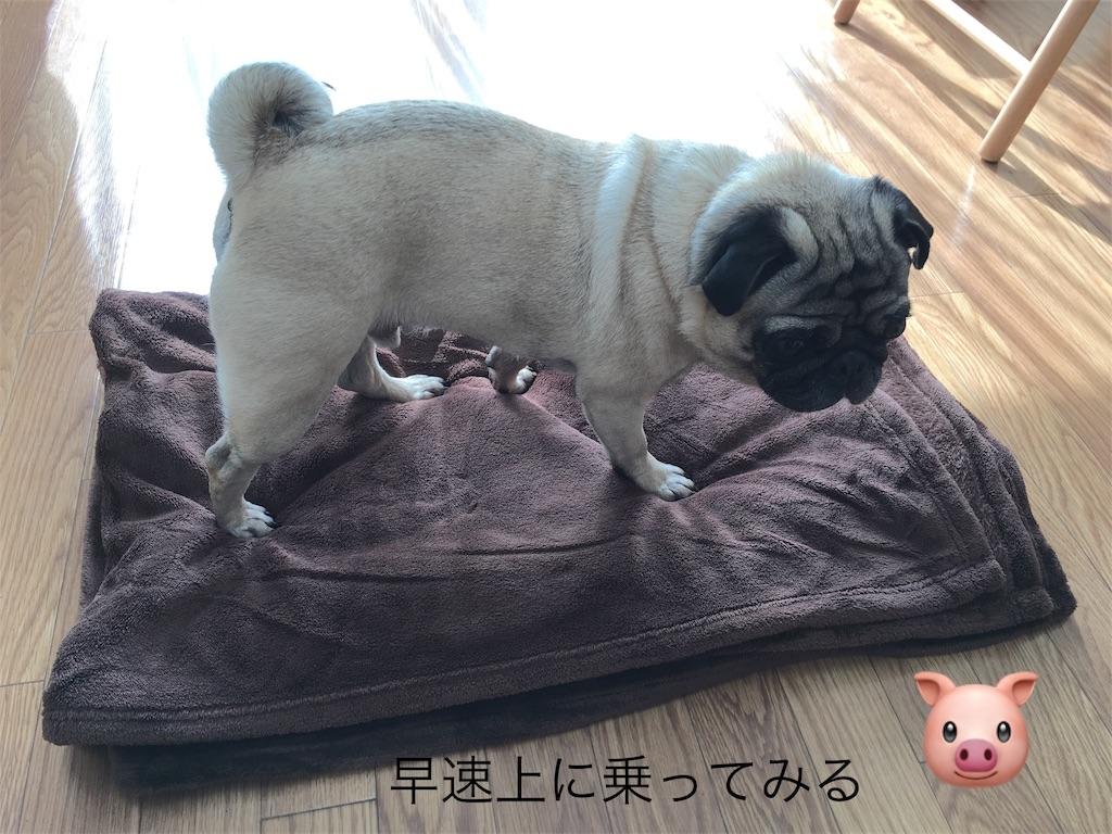 f:id:rabbit-pig-cat:20170307082257j:image