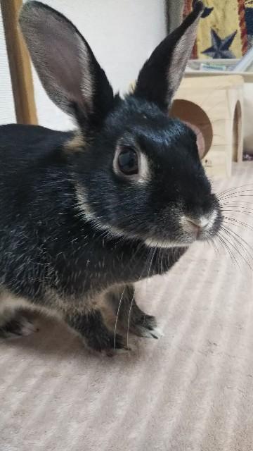 f:id:rabbit_runa:20190323191744j:plain