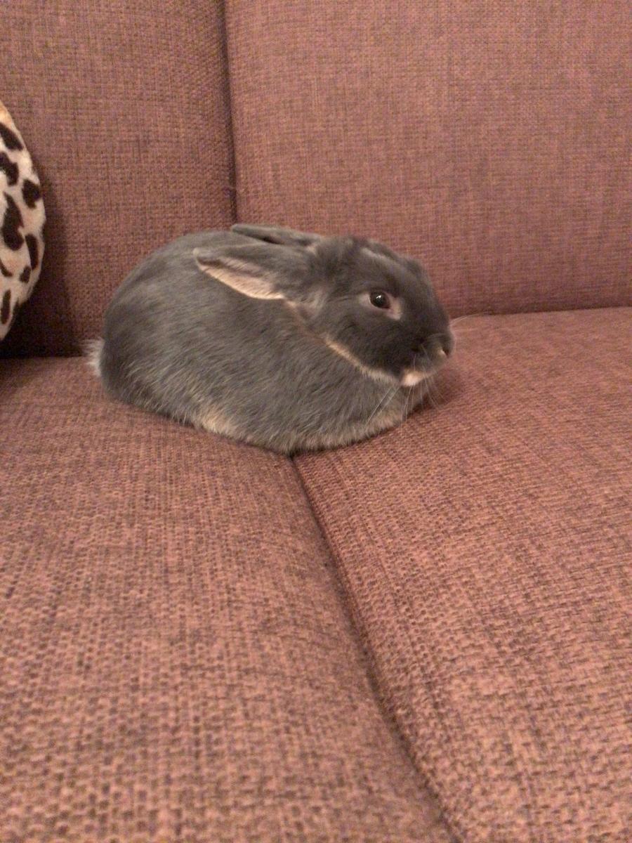 f:id:rabbittail-ko:20200513104444j:plain