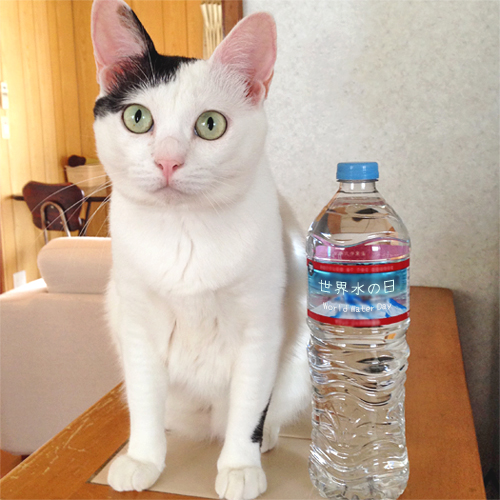 WorldWaterDay-and-Cat