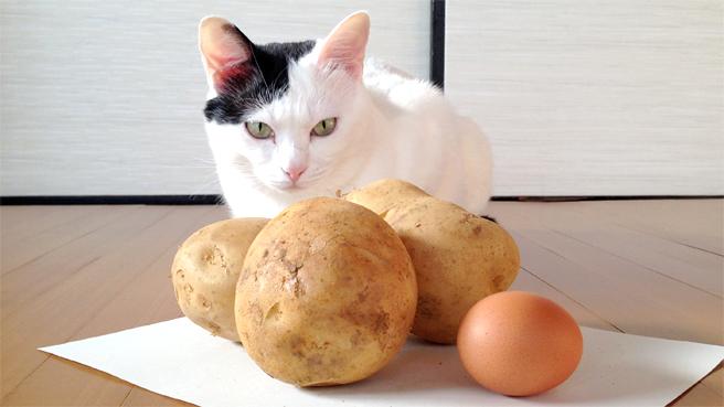 jagaimo-cat