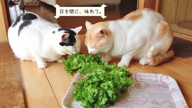 wasabina-to-neko-7