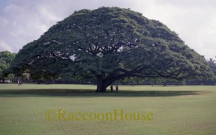 f:id:raccoonhouse:20180518194809p:plain