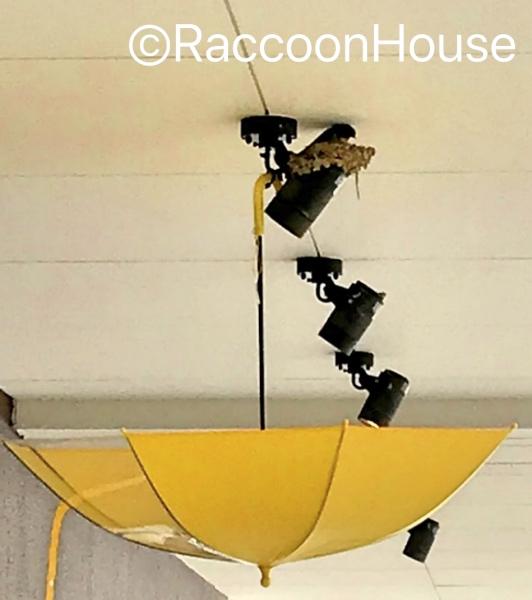 f:id:raccoonhouse:20190611192912p:plain