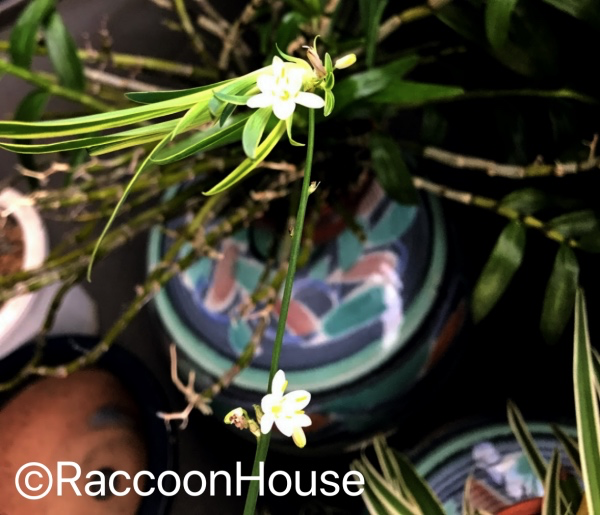 f:id:raccoonhouse:20190619205527p:plain