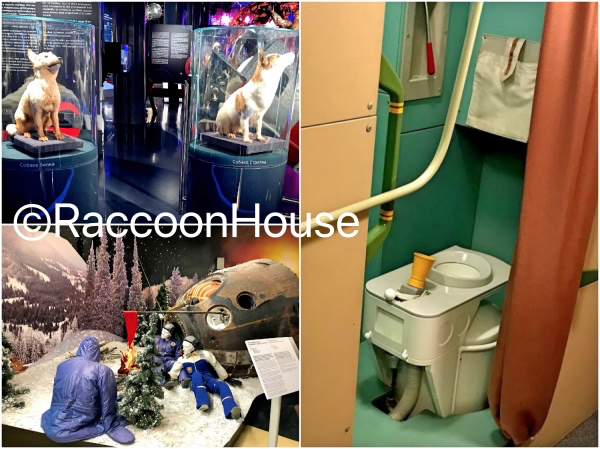 f:id:raccoonhouse:20191030191755p:plain