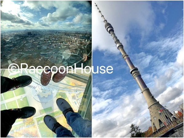 f:id:raccoonhouse:20191112203358p:plain