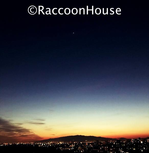 f:id:raccoonhouse:20200313203005p:plain