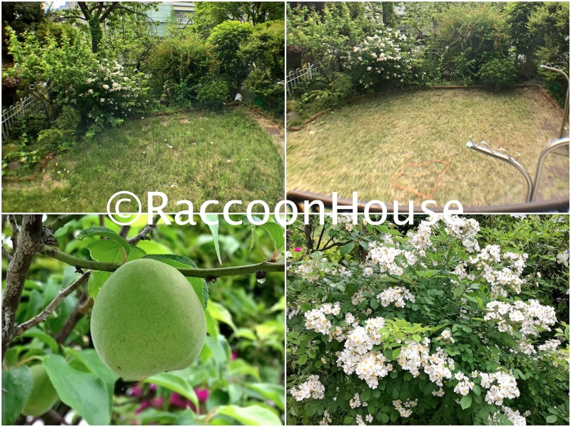 f:id:raccoonhouse:20200506154828p:plain
