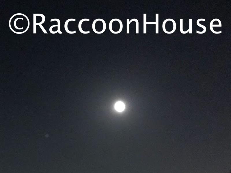 f:id:raccoonhouse:20200604205640p:plain