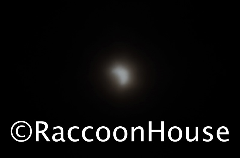 f:id:raccoonhouse:20200621203003p:plain