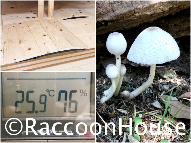 f:id:raccoonhouse:20200706185830p:plain