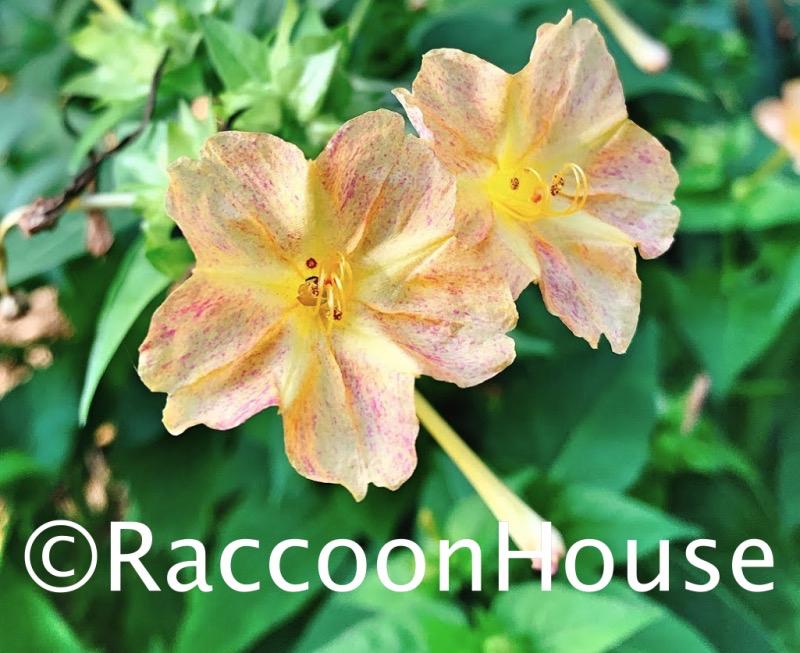 f:id:raccoonhouse:20201014175753p:plain