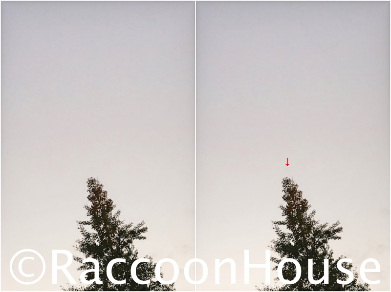 f:id:raccoonhouse:20201106221145p:plain