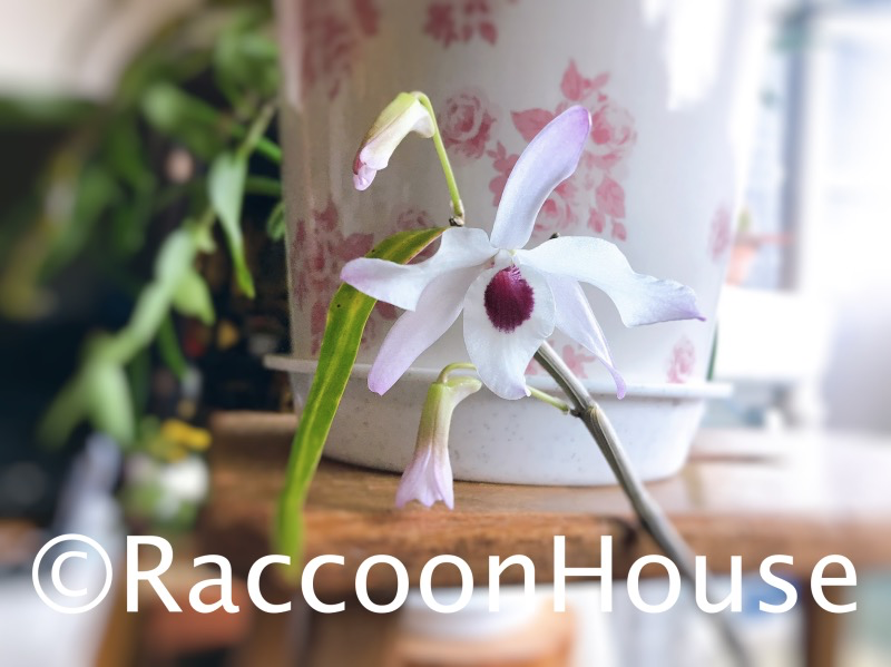 f:id:raccoonhouse:20201227125012p:plain