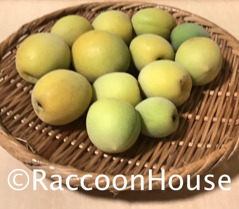 f:id:raccoonhouse:20210609173410p:plain