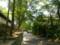 東福寺に至る道の木陰