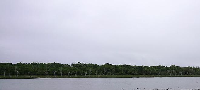 野付半島ナラワラ