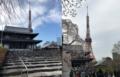 [芝][増上寺][港区][東京タワー][桜][さくら][満開][池上本門寺][池上][本門寺]
