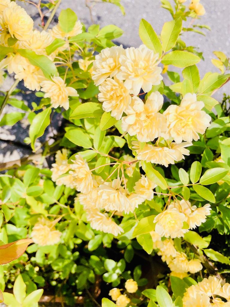 f:id:rainbowflowers:20200417171751j:image