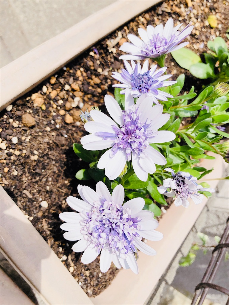 f:id:rainbowflowers:20200417171931j:image