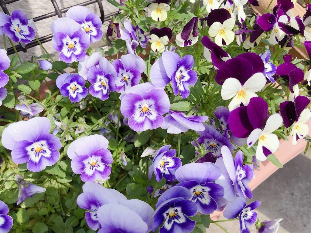 f:id:rainbowflowers:20200417171939j:image