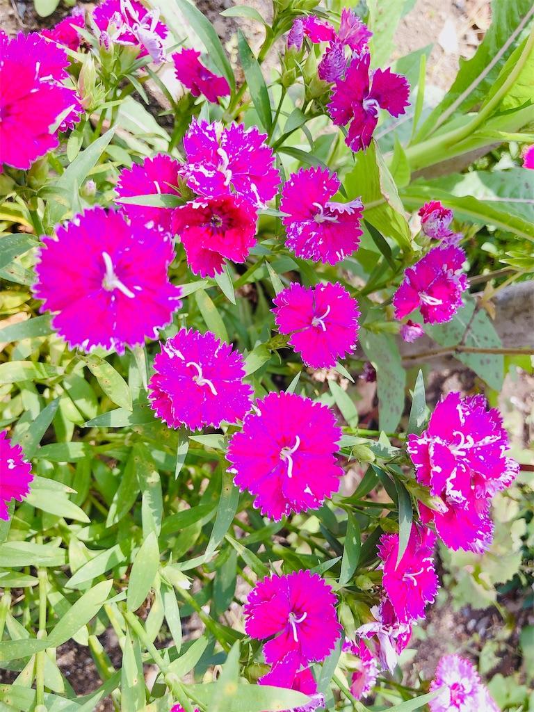 f:id:rainbowflowers:20200417171955j:image